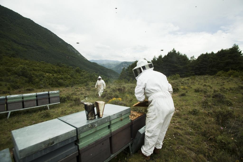 Muria beekeepers at work
