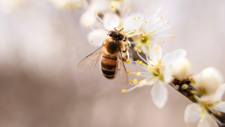 La marca de miel ecológica Muria BIO celebra el Día Mundial de la Abeja con la buena noticia de su recuperación